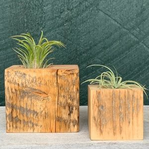 Handcrafted | Rustic Wood Air Plant Holders